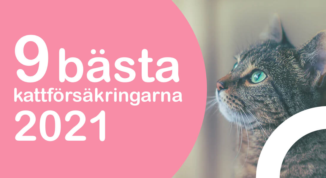 Bästa kattförsäkringen 2021